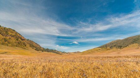 savanna: Savanna with blue sky Stock Photo