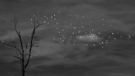 flew: Black and white Stock Photo