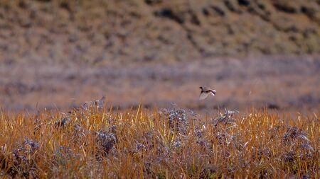 flew: Bird flying