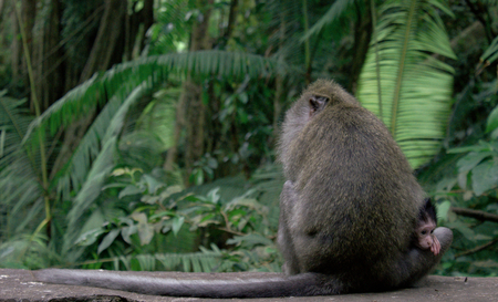 occiput: monkey with his little baby