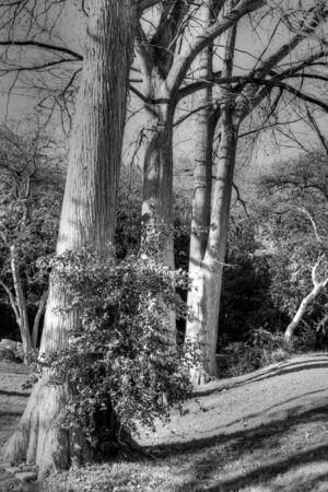 bw: B&W Trees
