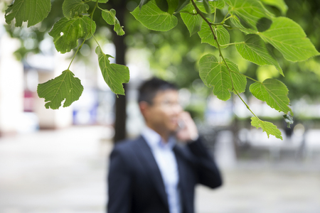 forground: Focus is on tree leaves in forground, with Chinese business Man using his Smart phone out of focus in background. Stock Photo