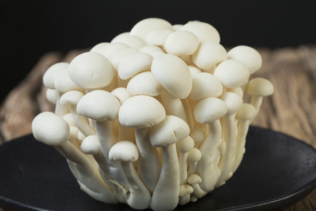 buttery: A cluster of Brown Beech mushrooms, or Bunashimeji. The mushrooms have a nutty, buttery flavor and crunchy texture. Stock Photo