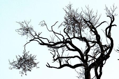eigenaardig: Bijzondere vorm van de boom