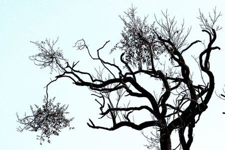 peculiar: Peculiar shape of the tree Stock Photo