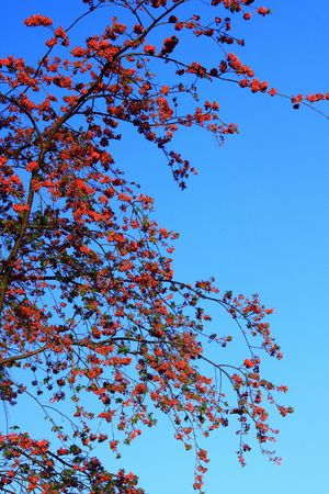 Cherry blossom in spring on the sky background photo