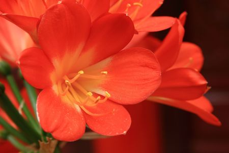 stamens: Blooming-tipped stamens