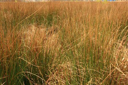 野草: 野生草の背景