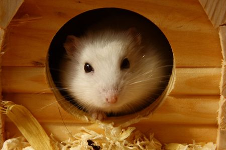 Hamster and its home photo
