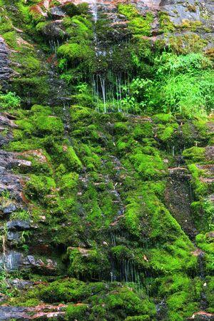 green vegetation: Beautiful streams and green vegetation