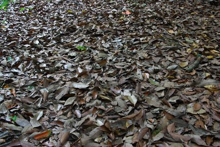 multiple images: Closeup of fallen leaves