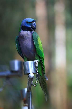 maccaw: colorful parrot Stock Photo