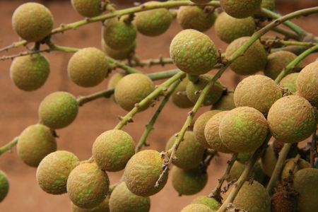 litschi: Closeup of  lychee