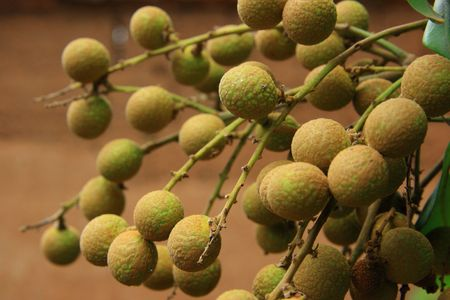 litchi: Closeup of litchi