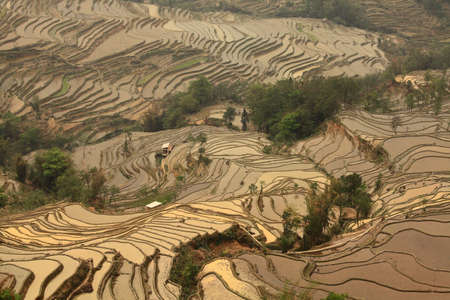 Rice terraced fields in Yuan Yang, China photo