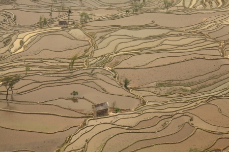 china art: Rice terraced fields in Yuan Yang, China
