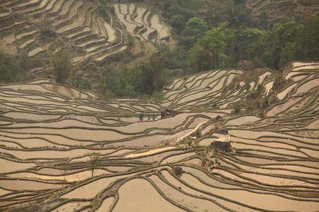 yuan yang: Rice terraced fields in Yuan Yang, China