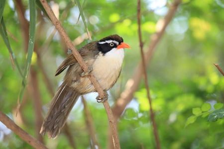 Tree sparrow  photo