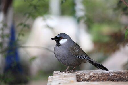 shiny black: Black shiny bird standing on the tree