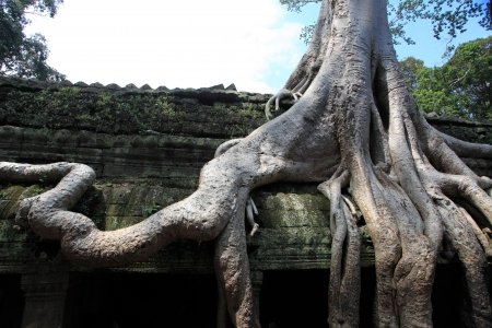 Ta Prohm Temple, Angkor Wat, Cambodia photo