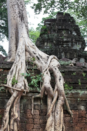 Ta Prohm Temple, Angkor Wat photo