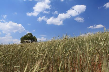 Yellow and Green field with blue summer sky Stock Photo - 13694712