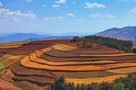 The scenery of rural crops cultivation