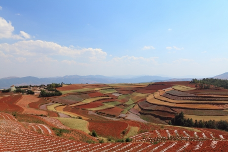 The scenery of rural crops cultivation photo