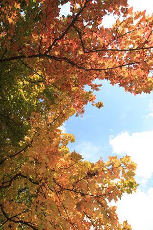 angle: Low angle view of trees