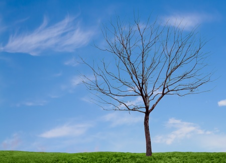 minimal: a barren tree on a minimal landscape of grass and sky.