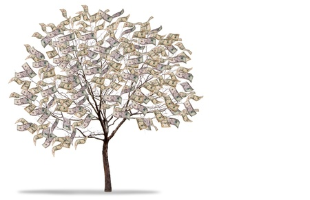 a tree covered in money isolated on a white background