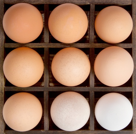Different shades of an egg, from pure white to brown, showing harmony in diversity. Displayed in a printers drawer. Stock Photo - 12503613