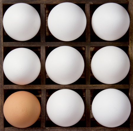 Diversity eggs, eight white eggs and one brown eggs, used as a symbol for diversity. photo