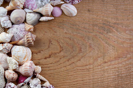 Sea shells on a wooden plank photo