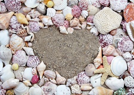 Sea shells making a frame in the shape of a heart photo