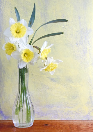 composition: Daffodil still life on aged background and wooden plank