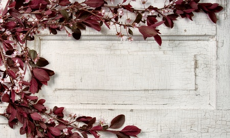 door leaf: Choke cherry branches and blossoms on a vintage door