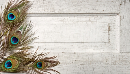 plumas de pavo real: Plumas de pavo real en una puerta blanco antiguo o vintage para el fondo Foto de archivo