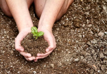 Close-up of childs hands holding dirt with a plant in it photo