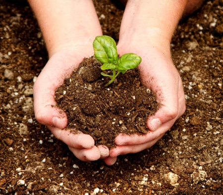 A child holding a seedling in dirt in their hands. photo