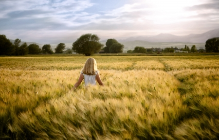 Girl or teen walking through wheat field, facing sunset.