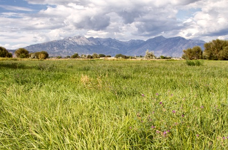 grassy field: Grassy pasture or field landscape with mountains