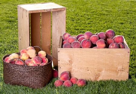 Many peaches in wooden crate and basket outside on grass Stock Photo - 15252195