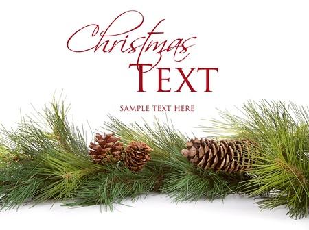 Navidad ramas de pino y piñas en el fondo blanco Foto de archivo - 15912503