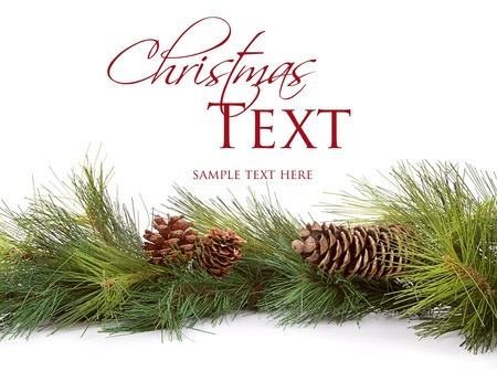 Christmas pine branches and pine cones on white background Standard-Bild