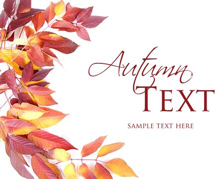Autumn leaves red and yellow on white background Stock Photo - 16758193