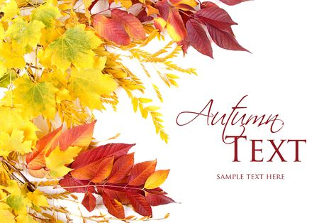 Autumn leaves red, green and yellow on white background Stock Photo - 16758166