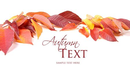 Autumn leaves red and yellow on white background Stock Photo - 16758191