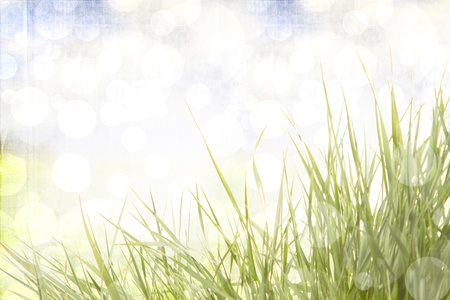 Grass with a sunny abstract background Stock Photo