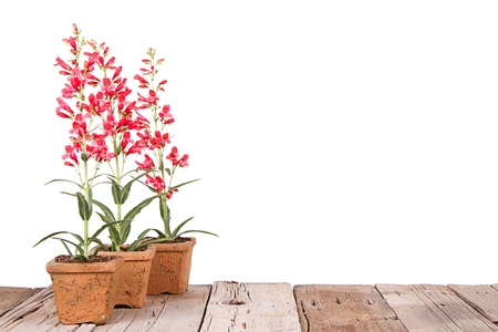 terra cotta: red flowers in a clay or terracotta pot on a wooden plank, with a white isolated background